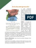 Región de la fosa pterigomaxilar.docx