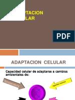 01 Adaptacion Celular