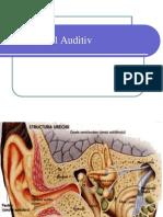 Analizatorul Auditiv