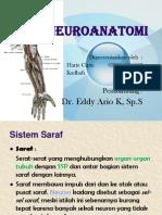 Neuro Anatomi (Dr. Eddy)