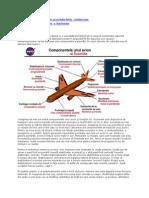 descrierea avionului