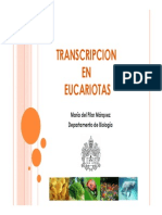 Transcripcion II