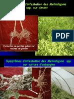 nematologie-3-110201045051-phpapp02
