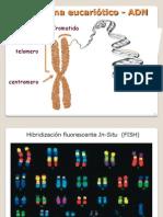 d.celular c.genetico
