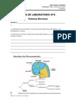 Guía de laboratorio N°6 - Sistema Nervioso - UISEK