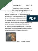 puma chilenoo