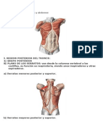 Músculos del tronco, torax y abdomen
