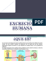 Excrecion Humana