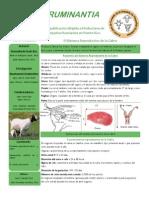 Sistema Reproductivo de La Cabra
