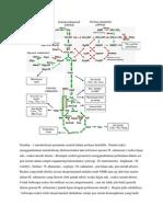 Degradasi asam amino new.docx
