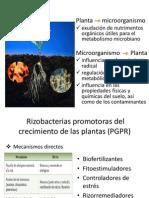 Beneficios microorganismos-plantas