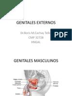 GENITALES EXTERNOS.ppt