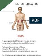 8. Patofis Uri