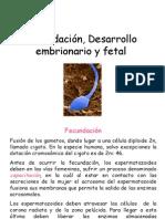 fecundación12
