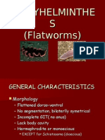 Flatworms