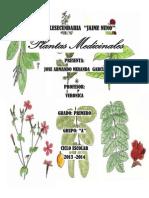 PLANTAS MEDICINALESS