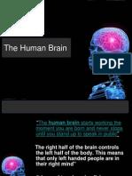 Brain Final PPT
