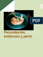 fecundacin embarazo y parto