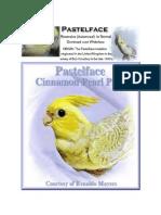 pastelface cockatiels
