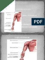 Miembro Superior 2 - Anatomia Humana