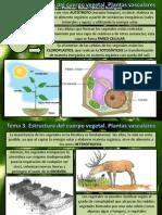Tema 3 Estructura Plantas I