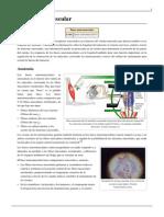 Huso Neuromuscular