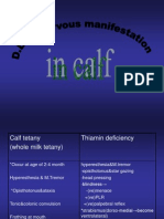 Nervous Manifestation in Calf