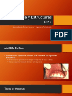 Cemento, Encia y Ligamento Periodontal