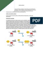 biologia acidos nucleicos