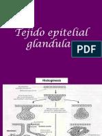 Tejido Epitelial Glandular (1)