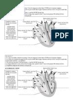 doc 2 schéma du coeur
