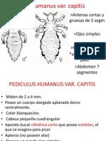 Práctico parásito 3