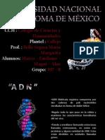 ADN - Recombinante