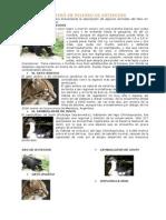 ANIMALES DEL PERÚ EN PELIGRO DE EXTINCIÓN