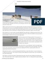 all about wolves   the wolves and moose of isle royale