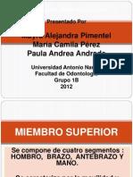 Miologia Del Miembro Superior 2012 Corregida