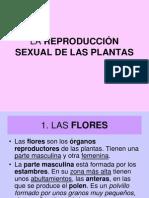 LA REPRODUCCIÓN SEXUAL DE LAS PLANTAS