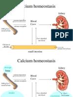 2d.CalciumHomeostasis (1)