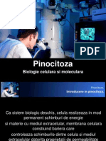 Pinocitoza