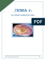 Tema 1 La Cc3a9lula Unidad de Vida Alumnos 2013 14
