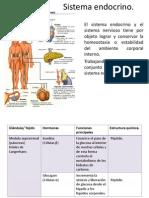 Sistema Endocrino[1]