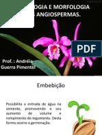 Histologia e Morfologia Das Angiospermas