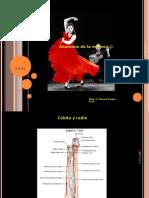 anatomadelamueca-110127104227-phpapp02[2]