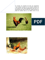 Para los investigadores avícolas