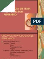 reproductor-femenino-1215286065578635-9