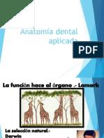 anatomiadentalaplicada-130907122508-