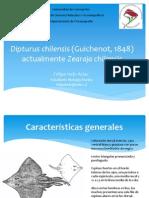 seminario zearaja chilensis