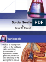Scrotal Swelling2