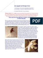 Aedes Aegypti and Dengue Fever