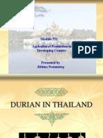 6-Sau Rieng Thai Lan